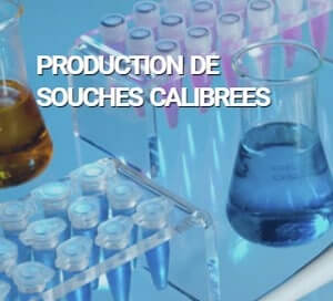 bactup production souches calibrees