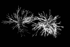 Microorganims : Figure 2b1